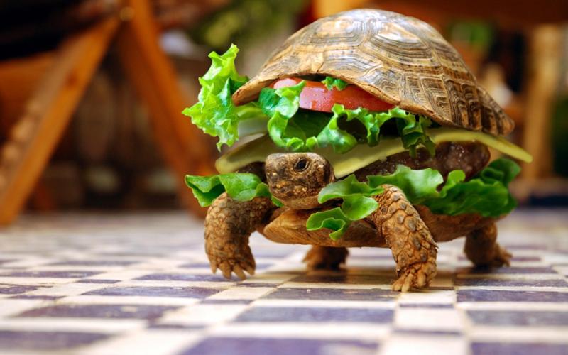 tortuga-hamburguesa