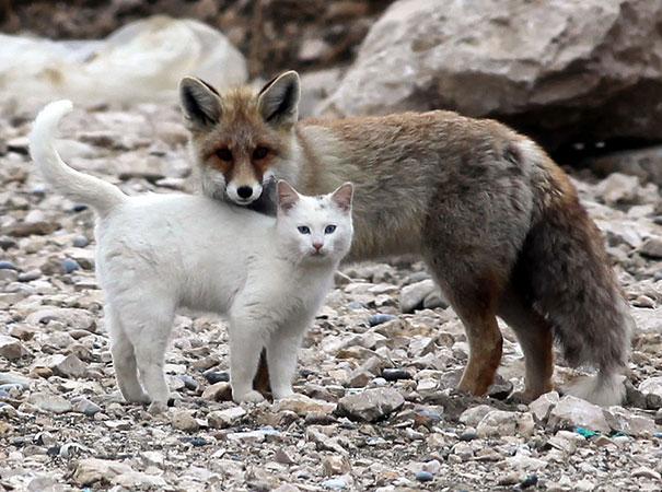 cat-fox1