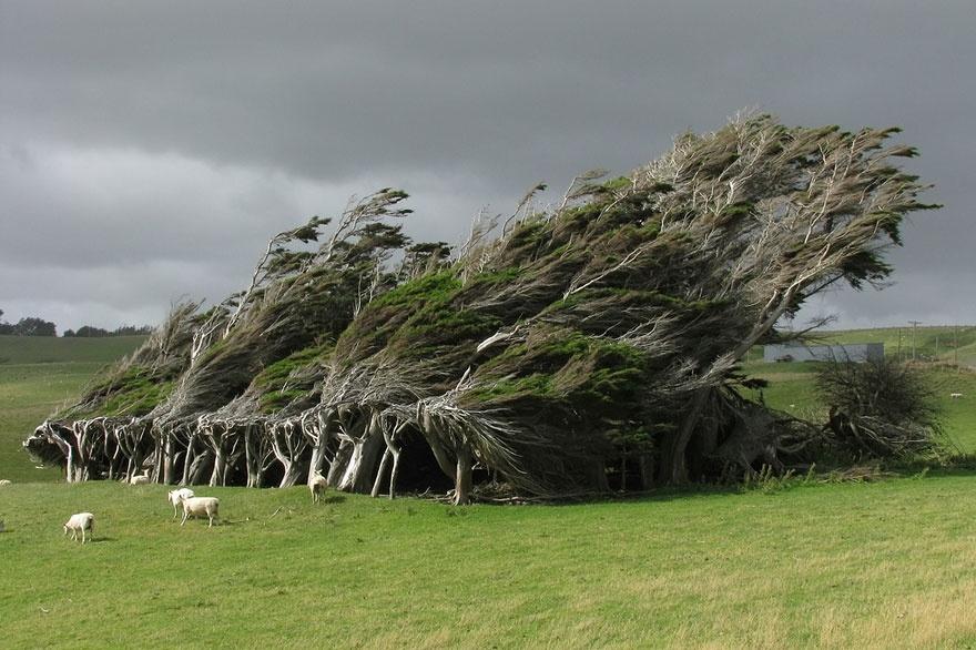 arbres13