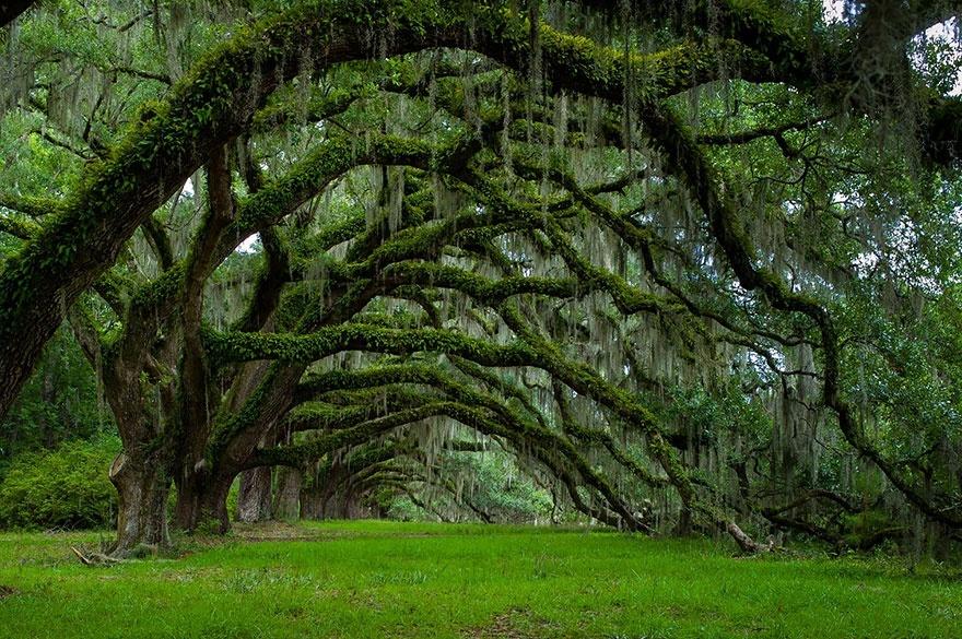 arbres2