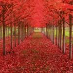Els 6 arbres més bonics del món que cal visitar
